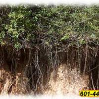 Erosion Control with Live Oak Landscapes