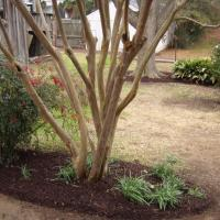 Live Oak Landscaping Example