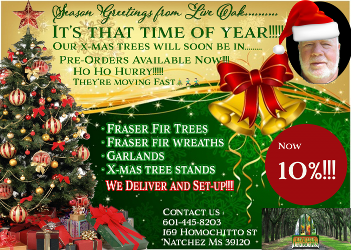 Live Oak, Christmas Trees, Fraser Fir
